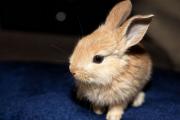 美丽公主兔